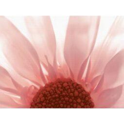 Dekor Summer Colours červená inserto květ 29,7x60