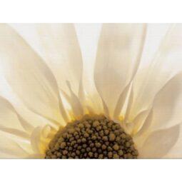 Dekor Summer Colours žlutá inserto květ 29,7x60