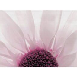 Dekor Summer Colours fialová inserto květ 29,7x60