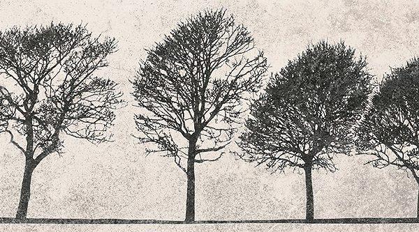 Obklad Willowo Sky inserto Tree 29×89